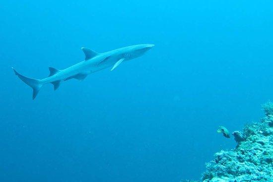 Thresher Cove Dive Resort: Sehr schönes Tauchen auf Malapascua mit May und Vic.