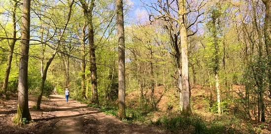 Nymans Gardens and House: woodland trail