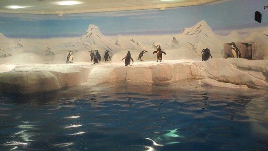 Shanghai Ocean Aquarium: IMG_20180423_1506275_large.jpg