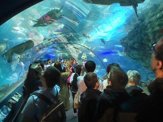 Shanghai Ocean Aquarium: IMG_20180423_1521168_large.jpg