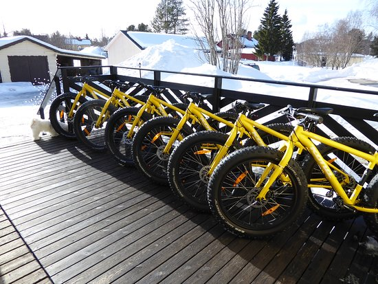 Vasterbotten County, Sweden: We now offer FatBikes to rent or why not try one of our guided tours