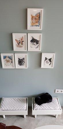 O Porto dos Gatos : Lovely