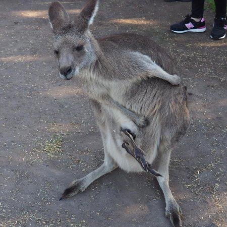 Grantville, Avustralya: photo2.jpg