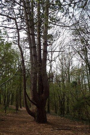 Hotton, Belgium: Beautiful woodland walk with trees, fauna and flowers