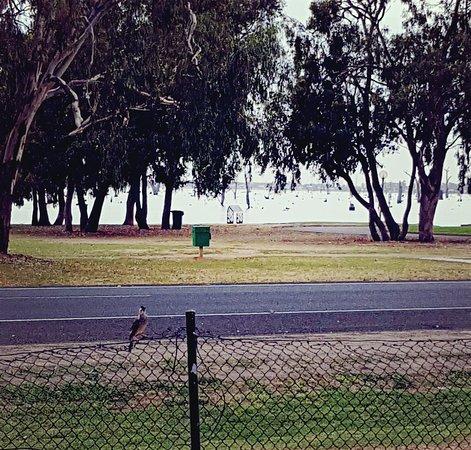 Mulwala, Australia: 20180423_212114_large.jpg