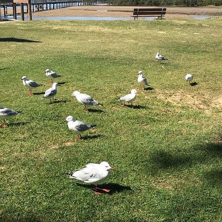 North Haven, Australia: photo5.jpg