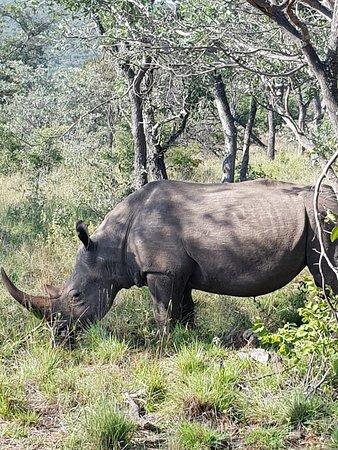 Welgevonden Game Reserve, África do Sul: 20180418_085542_large.jpg