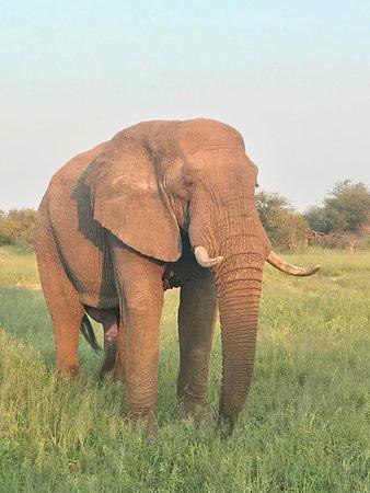 Изображение Kambaku Safari Lodge