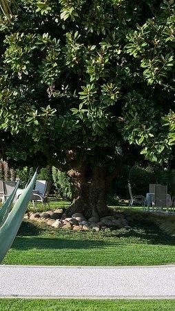 Hotel Terminus: la magnolia