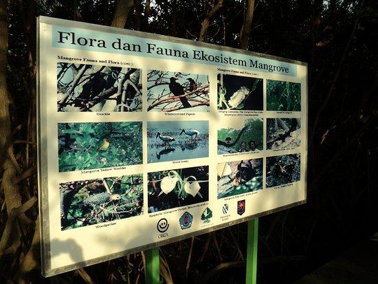 Papan Info Flora Fauna Ekosistem Hutan Mangrove Picture Of