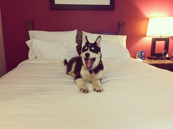 洛根智選假日飯店照片