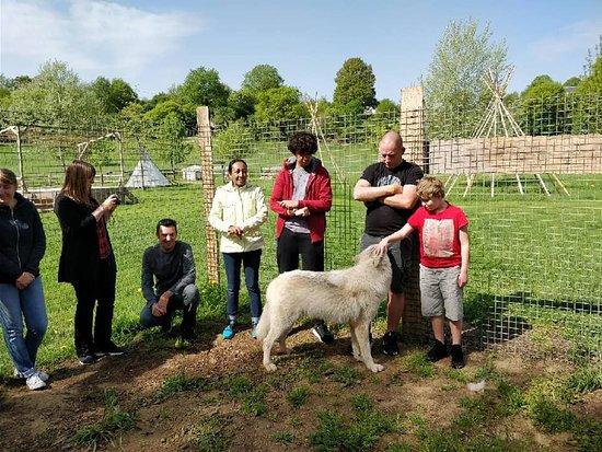 Brulon, Fransa: découverte des loups