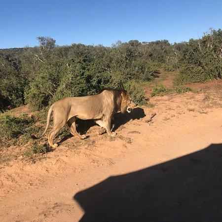 Addo Elephant National Park, Sudáfrica: photo0.jpg