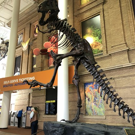 Natural History Museum Denver Tickets