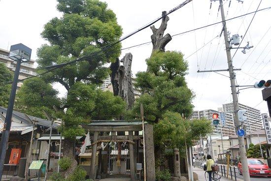 Watanabe no Tsuna Komatsunagi no Kusu