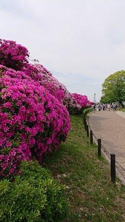 Asakayama Green
