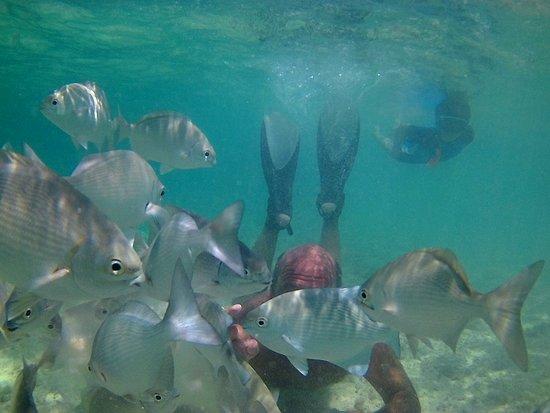 Isla Catalina: peces cuando tirábamos pan
