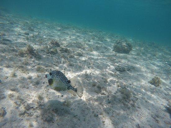 Isla Catalina: pez