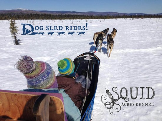 ‪Squid Acres Kennel Dogsled Tours‬