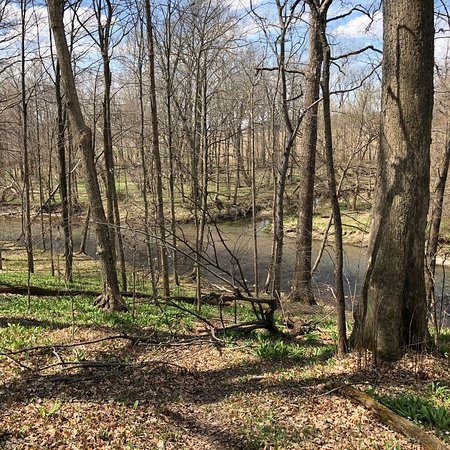 Sears Woods State Nature Preserve
