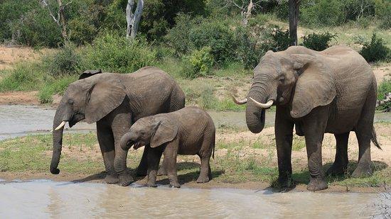 Monwana Game Lodge: gezinnetje olifant
