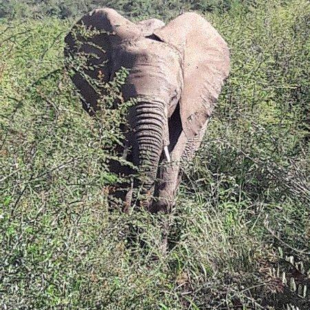 Pilanesberg Safaris and Tours Photo