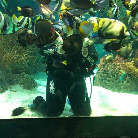 Ripley's Aquarium of the Smokies: photo0.jpg