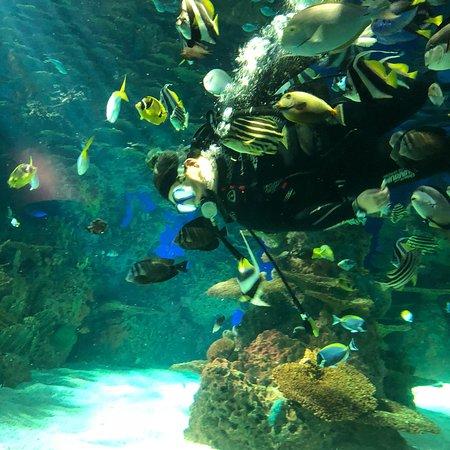 Ripley's Aquarium of the Smokies: photo1.jpg