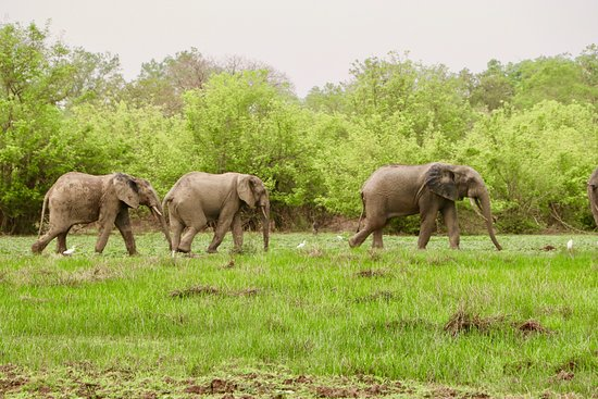 Mole National Park, Ghana: Amazing to see Elephants in the Wild