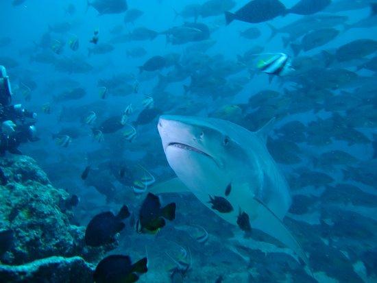 Beqa Island, Fiji: Shark Dive
