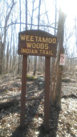 Weetamoo Woods & Pardon Gray Preserve: Easy Hike