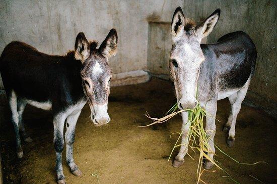 Granada, Nicaragua: Horseback riding and some nice burros