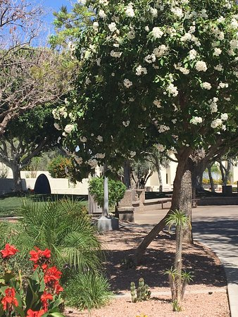 Old Town Scottsdale: photo1.jpg