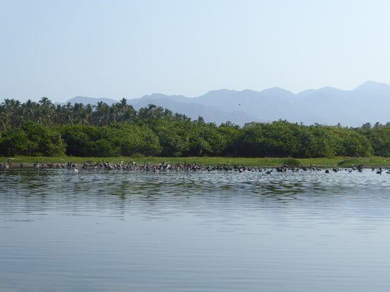 Majahua Palms: looking east from the beach in the area of the river, bird sanctuary