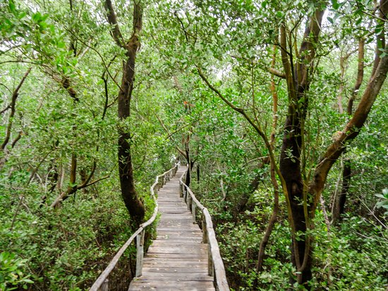 Calkini, Mexico: Mangrove walk.