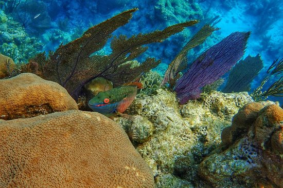 Glovers Reef Atoll, Belice: P4145345-01_large.jpg