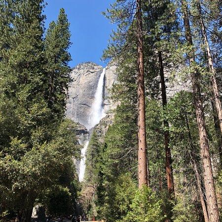Zdjęcie Yosemite National Park and Giant Sequoias Day Trip from San Francisco