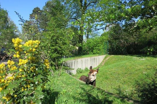 garten frankfurt, nice enclosure for okapi's. - picture of frankfurt zoo (zoologischer, Design ideen