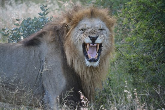 Madikwe Game Reserve, South Africa: King