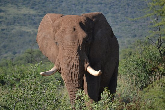 Madikwe Game Reserve, South Africa: Big boy