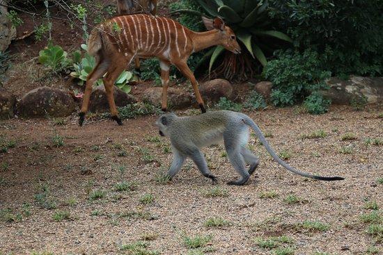 Hluhluwe Game Reserve صورة فوتوغرافية