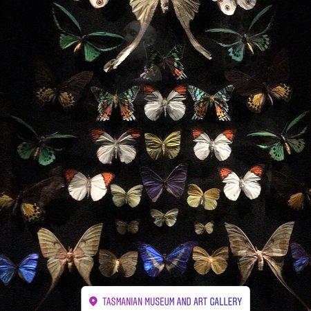 Tasmanian Museum and Art Gallery: photo0.jpg