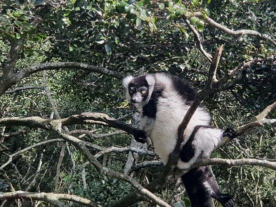 Monkeyland Primate Sanctuary: IMG-20180424-WA0000_large.jpg