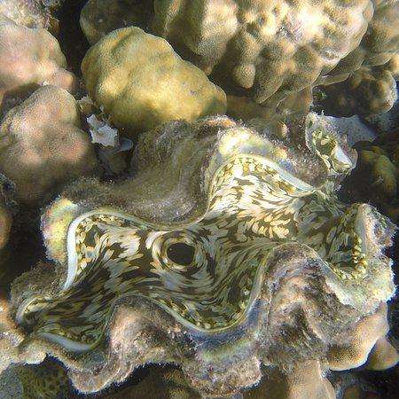 Coral Garden: photo0.jpg