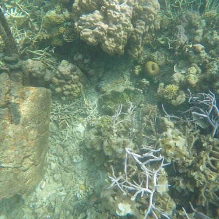 Coral Garden: photo1.jpg
