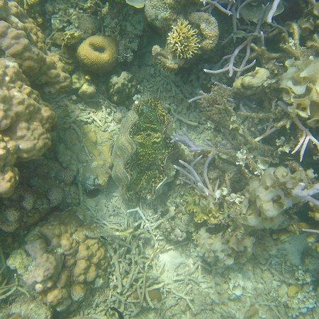 Coral Garden: photo2.jpg