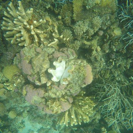 Coral Garden: photo5.jpg