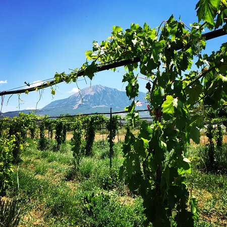 Paonia, CO: Orchard Grapes