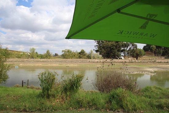 Warwick Wine Estate: Teich