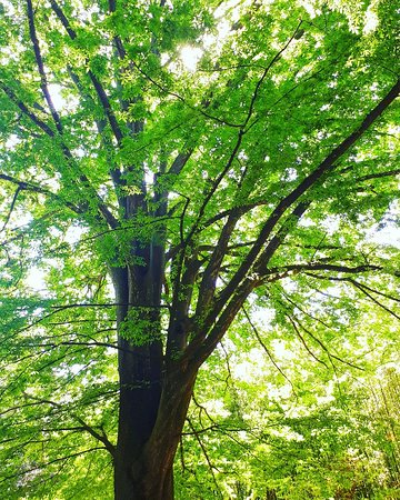 Img 20180418 164912 661 picture of jardin des plantes montpellier tripadvisor - Jardin d essence montpellier ...